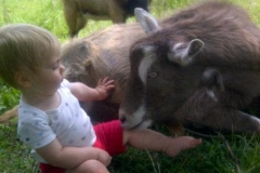 Austin - Goats mobile petting zoo kids entertainment